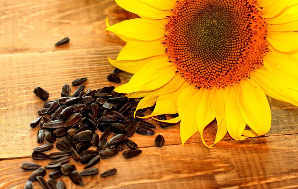 Câmara de Germinação Com Fotoperíodo – Produção de Sementes e Mudas.