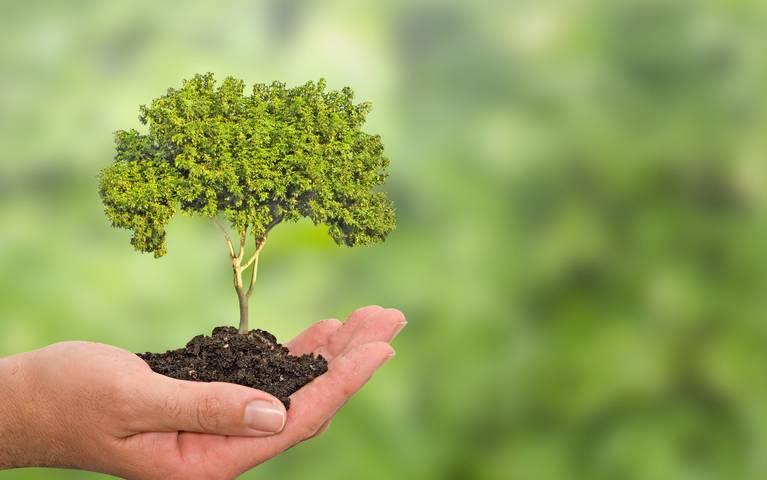 Câmara de Germinação de Plantas e Sementes auxilia reflorestamento.