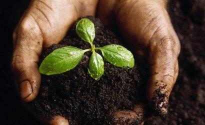 Mufla – Determinação de Teores de Carbono e Matéria orgânica em Solo.