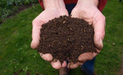 Mufla auxilia pesquisas sobre plantas do cerrado- Conheça esse equipamento